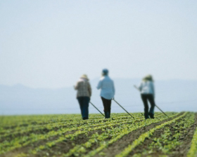 <!--:es-->Redadas Dañan a Agricultores de NY 2007 es el peor Año en el Campo<!--:-->