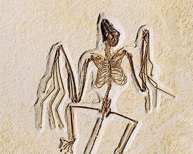 <!--:es-->Descubren fósil  de murciélago<!--:-->