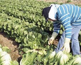 <!--:es-->¿Sobreviviría la agricultura de EE.UU. sin Indocumentados?<!--:-->