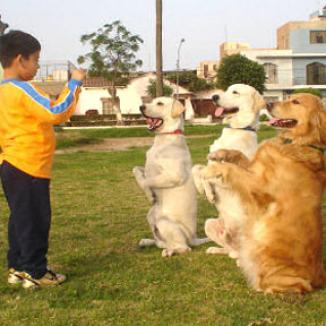 <!--:es-->Porque debe de Tener  Permiso para sus Perros<!--:-->