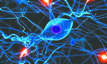 Investigadores canadienses descubren molécula implicada en el desarrollo de Esclerosis múltiple