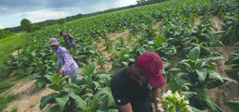 Grupo de expertos propone revivir un polémico programa para no cortar el flujo de trabajadores del campo a E.U.