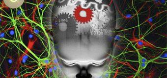 Buscando hackear el cerebro